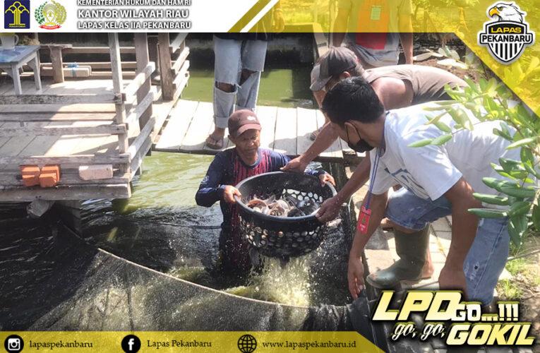 Bukti Peningkatan Kegiatan Kerja, Warga Binaan Lapas Pekanbaru Panen Ikan Lele